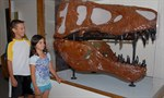 Delta Donates Fossils and Earth's Crust Mural to Lodi's WOW Museum!