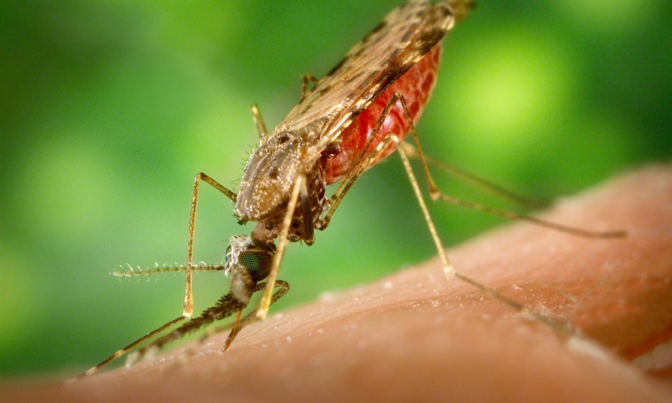 San Joaquin County Public Health Services Reports First Human West Nile Virus Illness of 2017