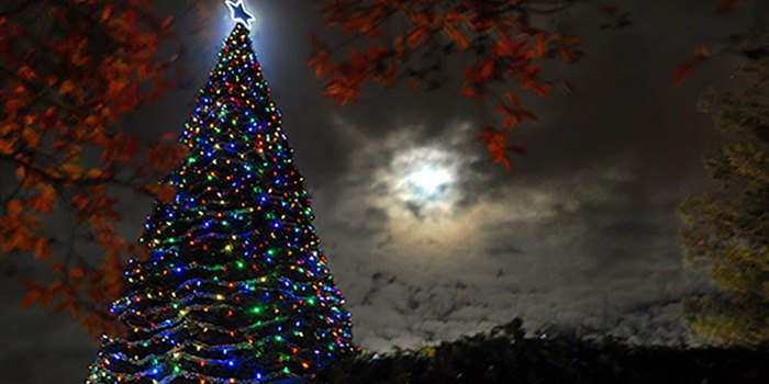 "29th Annual Hospice of San Joaquin ""Tree of Lights"" Ceremony"