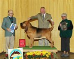 SJ Kennel Club Dog show