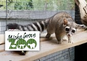Points of 'PAWS'itivity at the Micke Grove Zoo