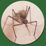 West Nile Virus Infection Detected in San Joaquin County