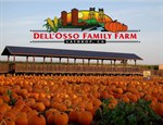 Pumpkin Maze at Dell'Osso Family Farm